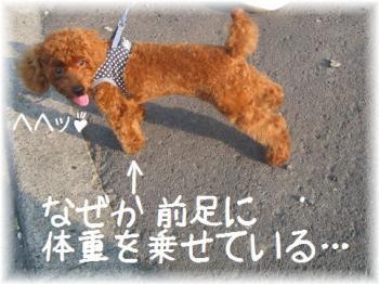 コピー ~ IMG_6287