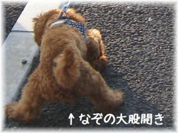 コピー ~ IMG_6271