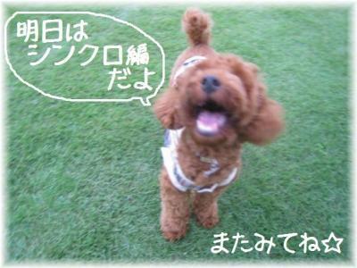 コピー ~ コピー ~ IMG_7092