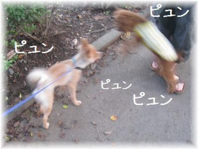 コピー ~ IMG_7577