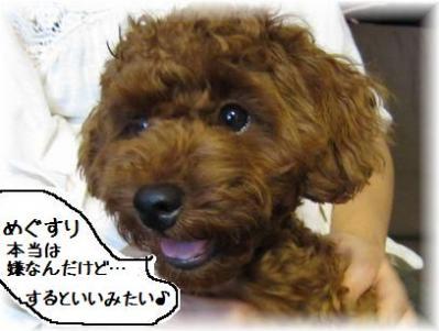 コピー ~ IMG_0917