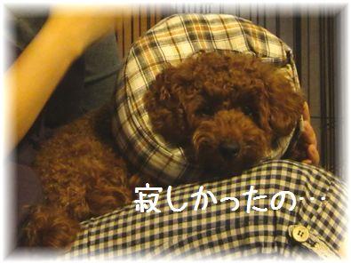 コピー ~ IMG_7031