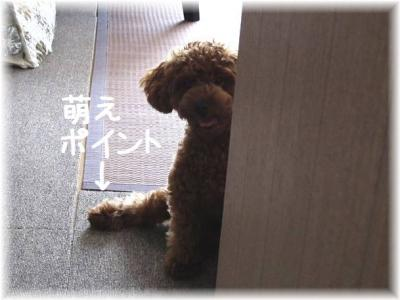IMG_1375.jpg