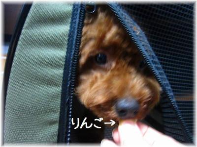 IMG_1439_20111016214150.jpg