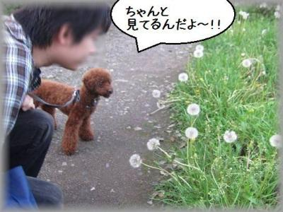 IMG_2010_20120506102131.jpg