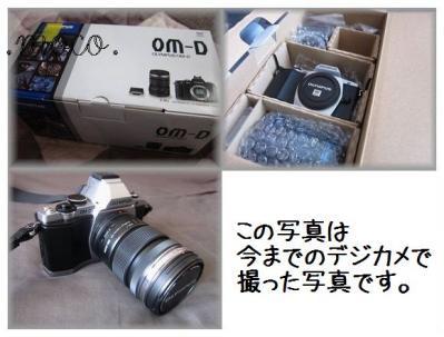 IMG_2089_20120507160543.jpg