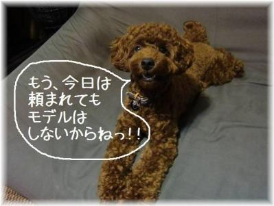 IMG_3950_20111025234533.jpg