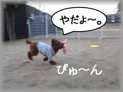 IMG_6465_20120329203048.jpg
