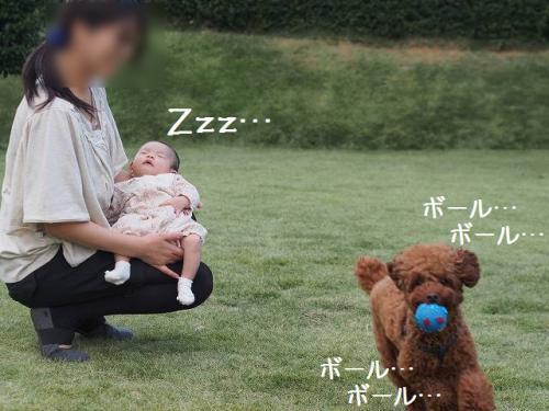 PA201187_20121020234458.jpg