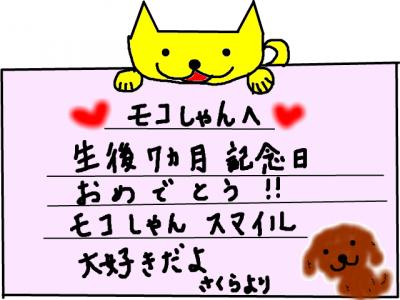 snap_sakurarako_2011106121143.jpg