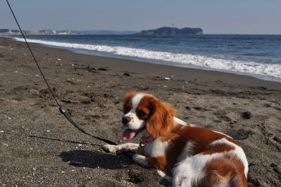 江ノ島とあたし