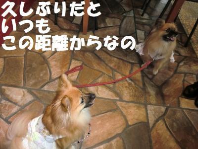 011繝シ繧ウ繝。繝ウ繝・convert_20111018220516