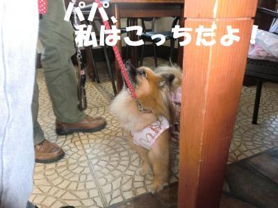 032繝シ繧ウ繝。繝ウ繝・convert_20111018221541