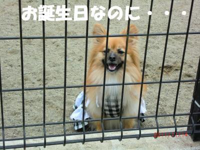 017繝シ繧ウ繝。繝ウ繝・convert_20111128203630