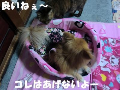 043・阪さ繝。繝ウ繝・convert_20111128204859