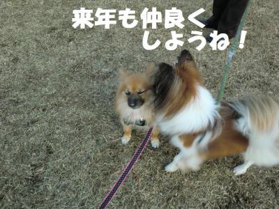 004繝シ繧ウ繝。繝ウ繝・convert_20120101133832
