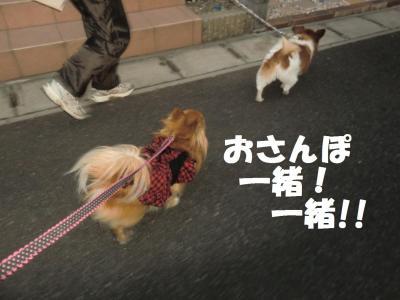005繝シ繧ウ繝。繝ウ繝・convert_20120101133847
