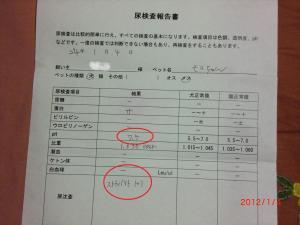 018繝シ菫ョ豁」_convert_20120105145504
