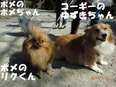 039繝シ繧ウ繝。繝ウ繝・convert_20120317221319