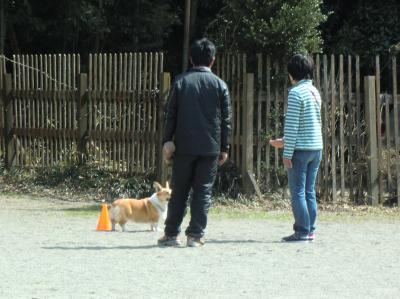 053繝シ繧ウ繝斐・_convert_20120317222204