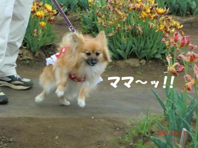 010・堺ソョ豁」_convert_20120505183652