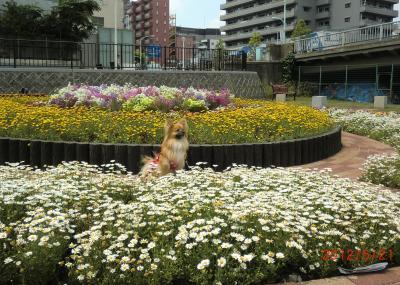 073繝シ繧ウ繝斐・_convert_20120523221212