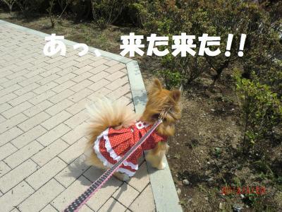035繝シ繧ウ繝。繝ウ繝・convert_20120530221020