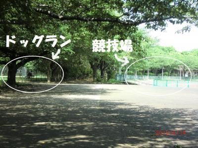 048繝シ繧ウ繝。繝ウ繝・convert_20120620211430