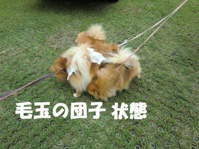 023繝シ繧ウ繝。繝ウ繝・convert_20120724221853