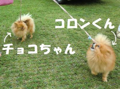 024・阪さ繝斐・繧ウ繝。繝ウ繝・convert_20120724222356