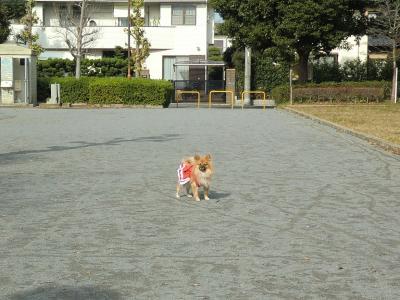 014繝シ繧ウ繝斐・_convert_20121123094948