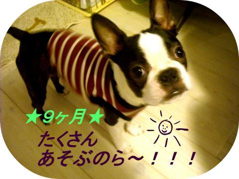 9th-六ュ_convert_20110620040525