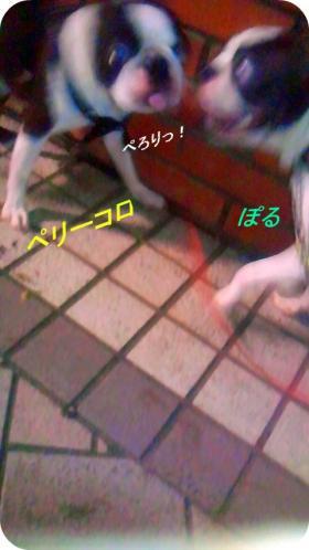 pol-peri3_convert_20110907160059.jpg