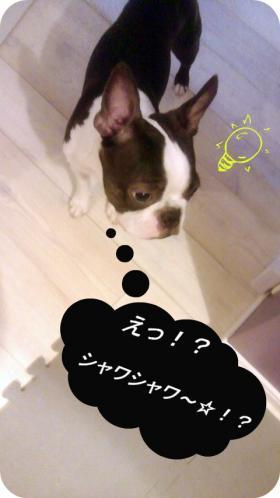 pol-syawa1_convert_20110809011943.jpg