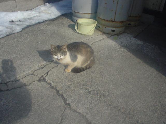 メンチかます猫が素敵!