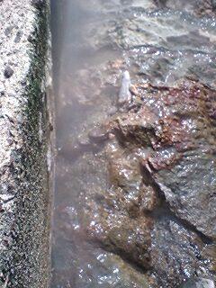 川沿いに吹き出る自噴