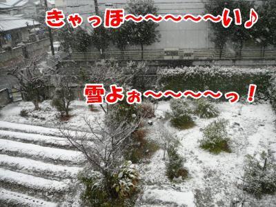 わおっ(死語だね・・)雪降ってるや~~ん♪
