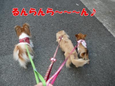 お散歩へ出発!