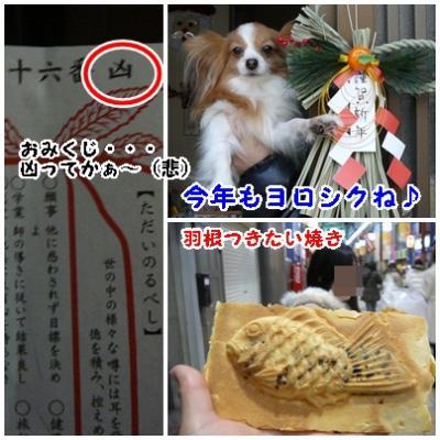cats_20120101204757.jpg