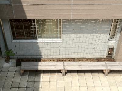 フウセンカズラ(壁面緑化)