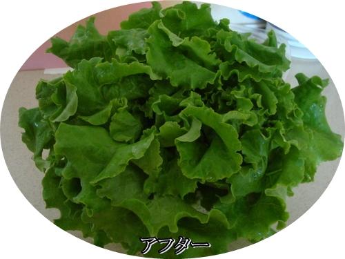 DSC08951moji.jpg
