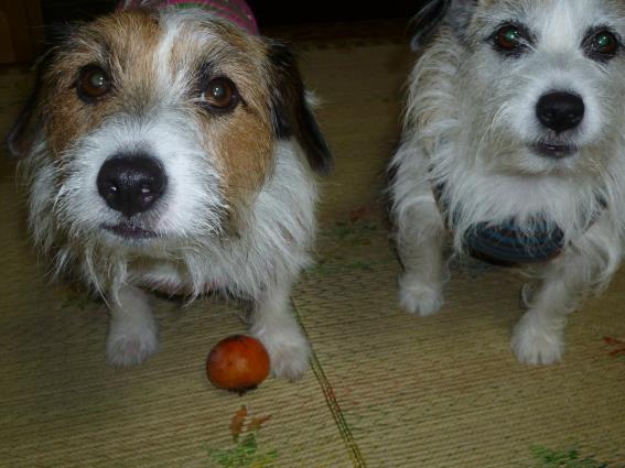 柿の出来は(3)