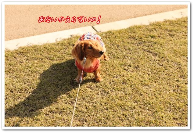 2013_11_09_0416-1.jpg