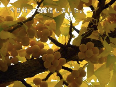 DSCN8274_convert_20111030202135.jpg