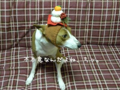 DSCN8498_convert_20120102101321.jpg