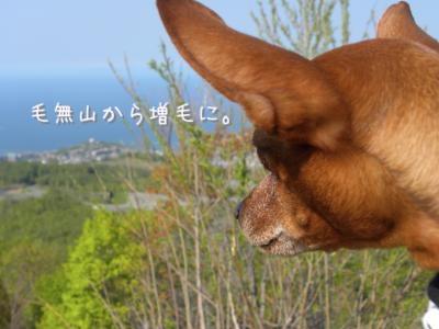 DSCN9444_convert_20120522194057.jpg