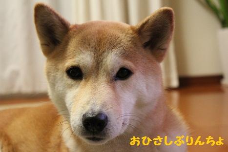 ぶりんちょ0328