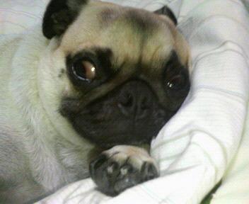 ギョロ目で寝る由紀夫
