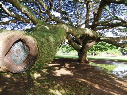この木何の木1