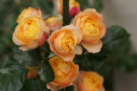 ベビーロマンチカも花いっぱい♪